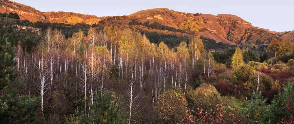 Золотая осень. Фото Юрия ЖВАНКО.