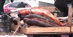 рыба jpg