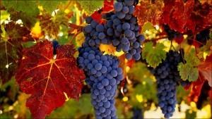 grape1-1