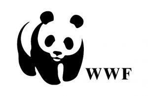 WWF КАК ВАЖНЕЙШАЯ ОРГАНИЗАЦИЯ НА ЗЕМЛЕ
